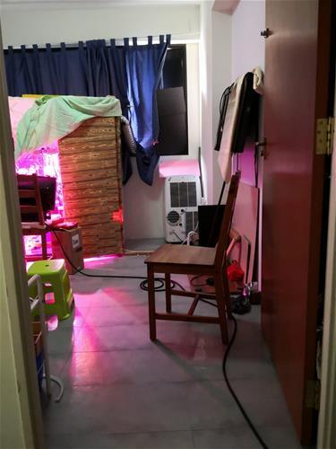 YishunGreenhouse02